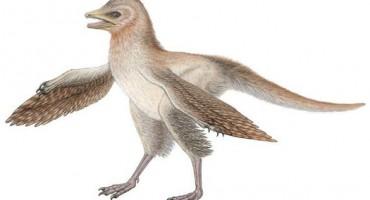eosinopteryx2_1