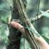 hand_tree_525