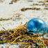 jellyfish_beach_525