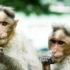 monkey_dorks_525