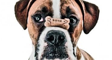 dog_bone_1