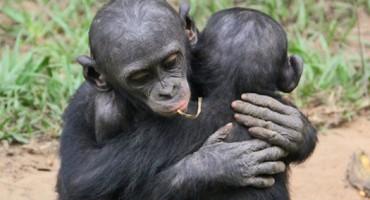 monkey_hug_1