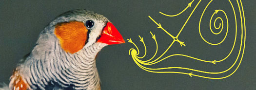 songbird_diagram_525