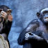 chimpanzee_pair_525