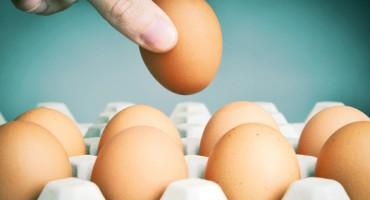 egg_carton_1