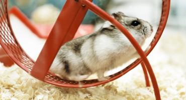 hamster_wheel_1