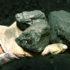 palmful_coal_525