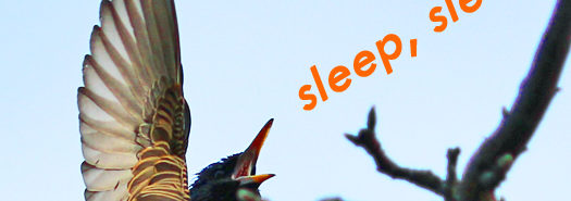 starling_sleep_525