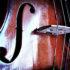 violin_525