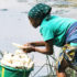 washing_cassava_525