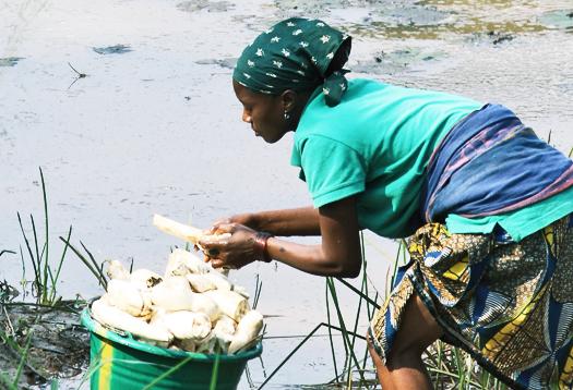 washing_cassava_525