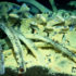 NOAA Ocean Explorer: Expedition to the Deep 2006 Slope Logs