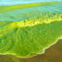 algae_bloom_525