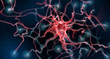 astrocyte1_crop_525