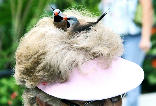 birds_hair_525