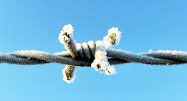 icy_wire_525