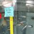 lab_zebrafish_525