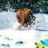 redhead_pool_525