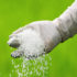 scattering_fertilizer_525