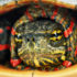w_painted_turtle_525