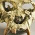 Pierolapithecus_catalaunicus_1
