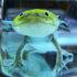 axolotl_525