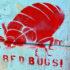 bedbug_graf_525