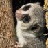 lemur_hibernation_525