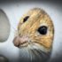 mouse_nose_1