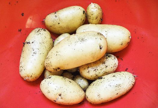 potatoes_525