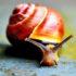 pretty_snail_525