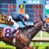 jockey_horse_525