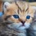 kitten_525