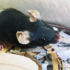 mouse_stress_525
