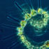 phytoplankton_525