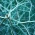 synapse_concept_525