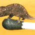 Brookesia_micra_on_a_match_head_525