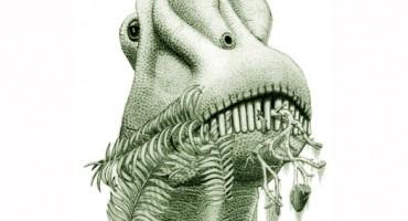 Diplodocinae_jmallon