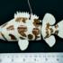 NYU_robot_fish_525