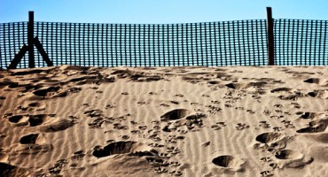 fence_dunes_525