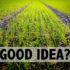 good_idea_525