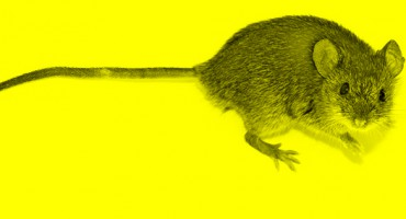 neon_mouse_525
