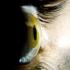 side_eye_525