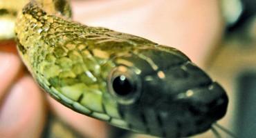 snakeyface_525