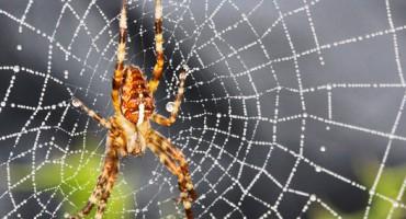 spiderweb_525