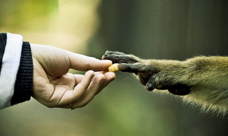 """Sharing doesn't just enhance the welfare of humans,"" says Michael Gurven. ""The human subsistence niche would never have been possible without sharing. It's no coincidence that sharing is most pervasive and structured among humans, the one primate whose economy is defined by high levels of interdependence."" (Credit: ""reaching for food"" via Shutterstock)"