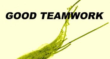 thioploca_teamwork