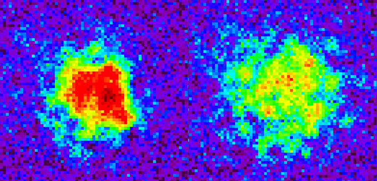 The image at left shows the density of atoms at the beginning of an experiment simulating the evolution of the universe following the big bang. Eighty milliseconds after the simulated big bang, the atoms have become much less concentrated in the experimental vacuum chamber, as indicated (at right) by the color gradation from red to yellow, green, blue, and purple in the density map. (Credit: Chen-Lung Hung)