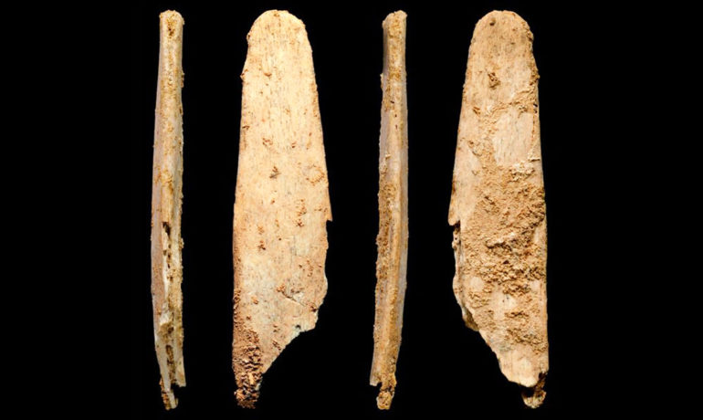 Four views of the most complete lissoir, or bone tool. (Credit: Quelle/UC Davis)