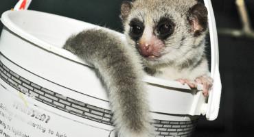 lemurbucket_1170